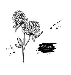 clover flower drawing set isolated wild vector image vector image