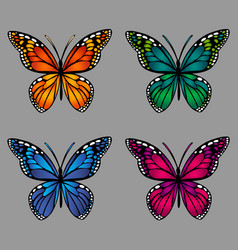 colorful butterflies on gray background vector image vector image