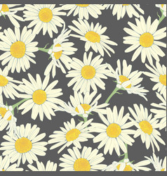 Floral seamless pattern with camomile vector