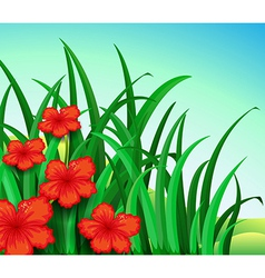 A garden of red flowers vector