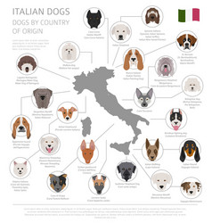 Dogs by country of origin italian dog breeds vector