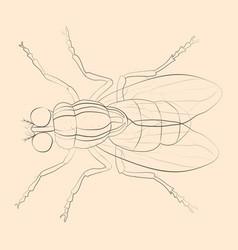 Housefly vector