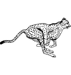 cheetah during the chase africa vector image