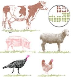 livestock vector image vector image