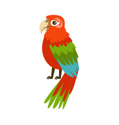 colorful macaw parrot colorful vector image vector image
