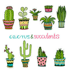 Cactuse and succulent hand drawn set doodle vector