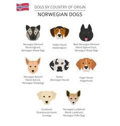 Dogs by country of origin norwegian dog breeds vector