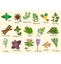 Kitchen condiment herbs and spices vector