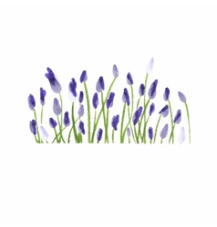 Lavender border Watercolor hand drawn floral vector