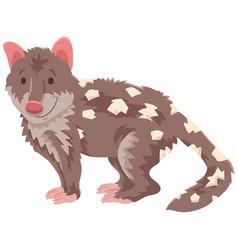 quoll cartoon wild animal character vector image