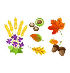 Autumn floral elements chestnut isolated vector
