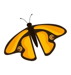 Beautiful and colorful butterfly isolated icon vector image