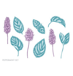 Set hand drawn pastel peppermint vector