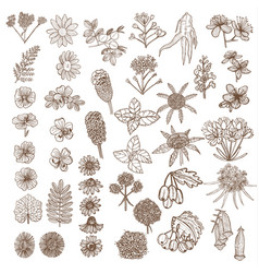 set of medicinal plant elements in hand-drawn vector image