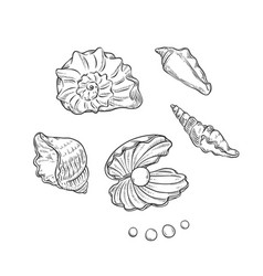 set sea shells and pearls different shapes vector image