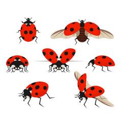 cartoon color lady bug icon set vector image