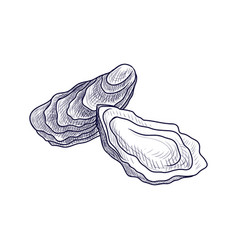 Drawing oysters vector