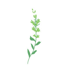 flat abstract green fern plant icon vector image