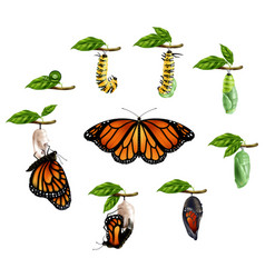 Life cycle of butterfly realistic set vector