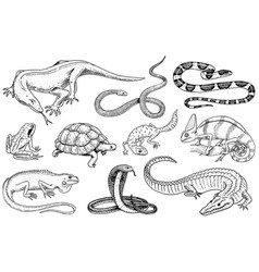 set reptiles and amphibians wild crocodile vector image