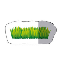 color tall grass icon vector image vector image