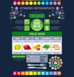 folic acid vitamin b9 rich food icons healthy vector image