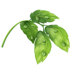 Green leaves with water dews vector