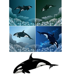 Killer whale set vector