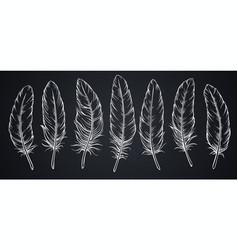 sketch feathers on blackboard vector image