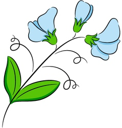 Sweet pea vector image