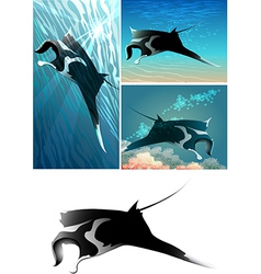 manta ray set vector image vector image