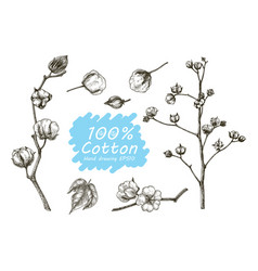 cotton set hand drawing vector image