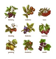 Sketch berries colored set vector image