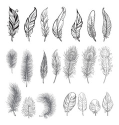 collection of hand drawn feather vector image