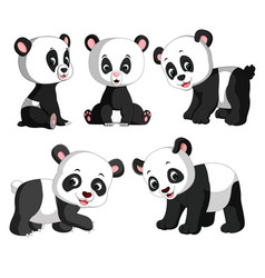 Collection of the cute panda vector