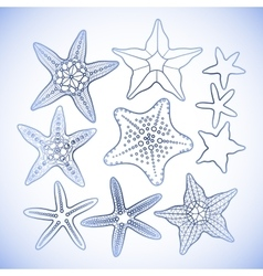 Graphic starfish collection vector