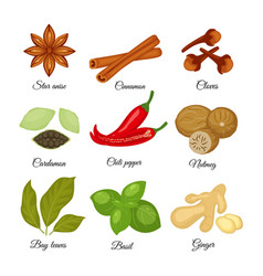 set of different spices star anise cinnamon vector image