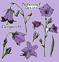 Vecrot sticker campanula violet background vector
