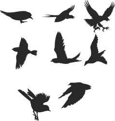 Birds shiluettes vector