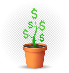 dollar plant grows in flowerpot vector image vector image