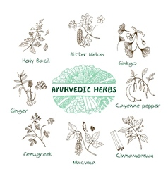 Ayurvedic herbs collection vector image