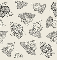 burdock seamless texture with hand drawn buds vector image