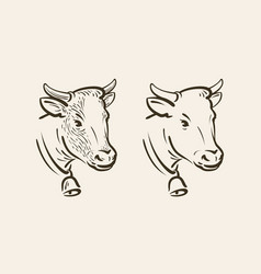 Portrait of cow with bell dairy farm animal vector