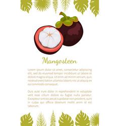 purple mangosteen exotic juicy fruit poster vector image
