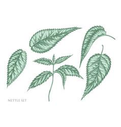 Set hand drawn pastel nettle vector