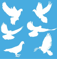 White silhouettes of doves vector