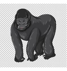 wild gorilla on transparent background vector image