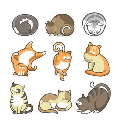 cartoon cats in various positions set on white vector image vector image