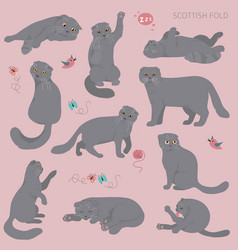 Cartoon cat characters collection scottish folds vector