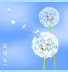 dandelion seeds blowing away on wind vector image